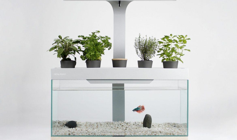 Le Toulousain Nénufarm lance son aquarium-potager autonome
