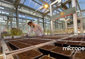 Le toulousain Micropep Technologies lève 8,5 millions d'euros pour améliorer la santé des plantes